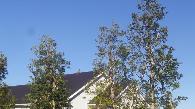 00a)    ' 大崎公園 ' から ' TBS披露山庭園住宅 ' を進行中で、屋根の上に居るのは猫かぁ?っと意味もなく撮った ・・・ ・・・ 17.01.01 平成二十九年 元旦 逗子「披露山公園」