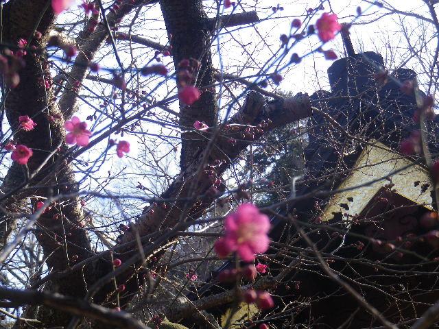 02-2)    17.01.28 本年は今日が旧正月元日の 鎌倉「妙本寺」