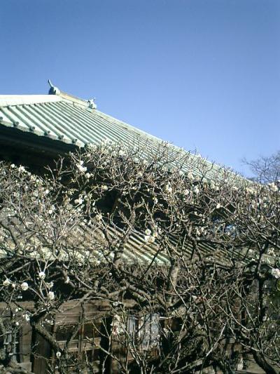 03_17929113523_o 03) 鎌倉扇ガ谷「東光山 英勝寺」 祠堂から仏殿を観る
