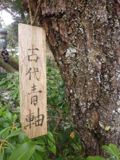 03-3)    17.0218  のどが渇いたから焼鳥くった _ 鎌倉「焼とり 秀吉」