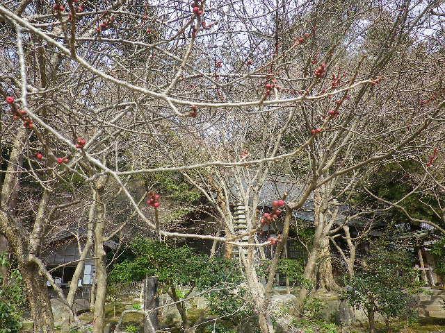 02-3) )  境内で撮影を許可されている範囲    17.02.18 鎌倉「覚園寺」 旧友たちの冥福を祈りました