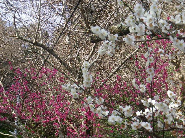 03-2)    17.02.18 鎌倉「御霊神社」