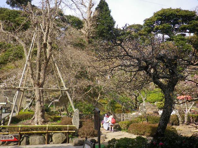 02) 17.0218 鎌倉「長谷寺」 梅咲く頃の最盛期を、覗き見した。