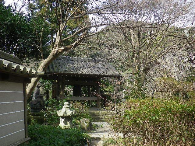 03-3)    17.02.18 鎌倉「瑞泉寺」  毎年同じような写真だけど、確実に十年前とは違う景観。