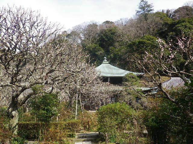 05)    17.02.18 鎌倉「瑞泉寺」  毎年同じような写真だけど、確実に十年前とは違う景観。