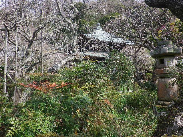 06)    17.02.18 鎌倉「瑞泉寺」  毎年同じような写真だけど、確実に十年前とは違う景観。