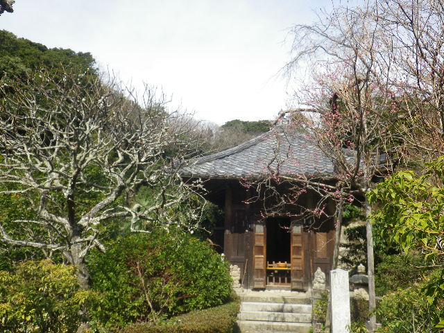 10-1)    17.02.18 鎌倉「瑞泉寺」  毎年同じような写真だけど、確実に十年前とは違う景観。