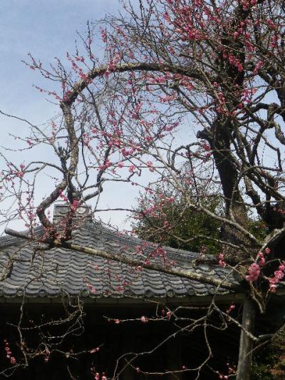 10-2)    17.02.18 鎌倉「瑞泉寺」  毎年同じような写真だけど、確実に十年前とは違う景観。