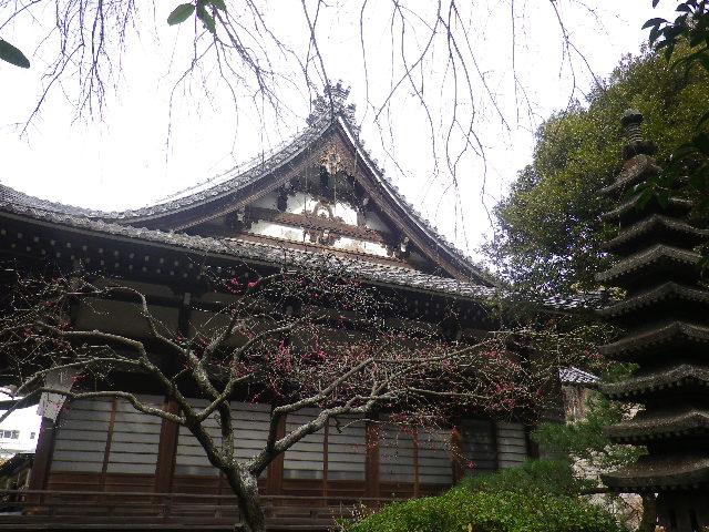 07-1) 鎌倉「安国論寺」 枝先に咲く梅の繊細さが際立つ頃