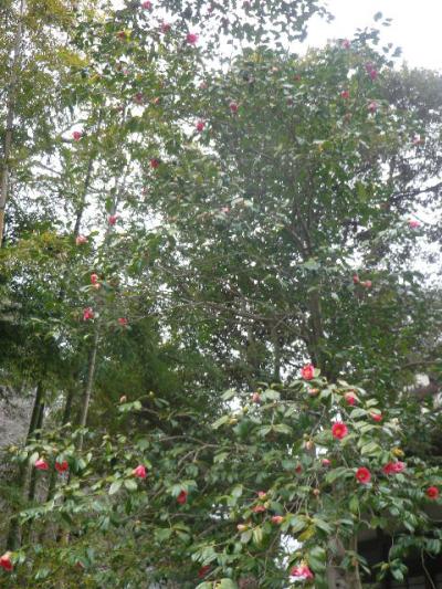 12-1) 鎌倉「安国論寺」 枝先に咲く梅の繊細さが際立つ頃
