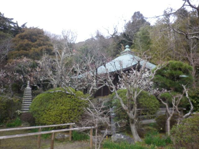 05)    17.02.22 鎌倉「浄光明寺」 立春から半月後の境内