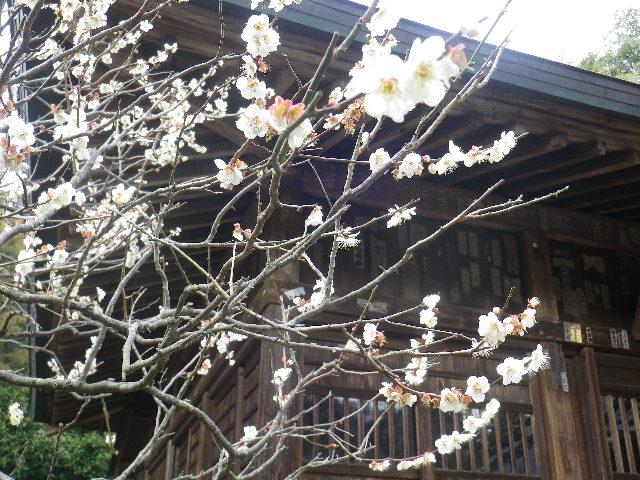 06-2)    17.02.22 鎌倉「浄光明寺」 立春から半月後の境内