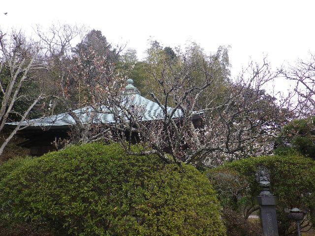 07)    17.02.22 鎌倉「浄光明寺」 立春から半月後の境内