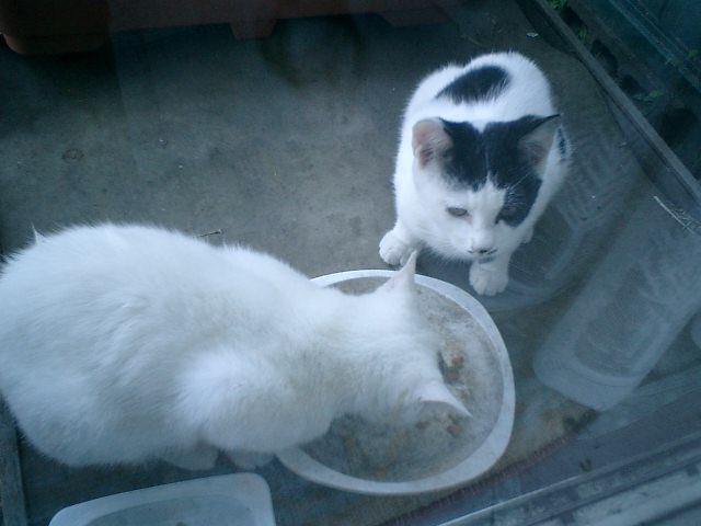 07.11.07  'チャス・チャンドラー'&'ジミ・ヘンドリックス'兄弟が、昼飯食いに来た。