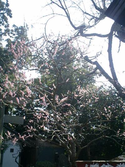 02_07.02.21 鎌倉「荏柄天神社」梅の季節