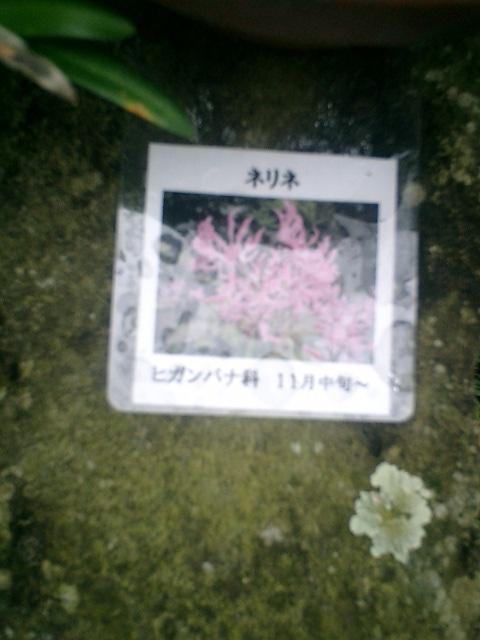 09_06.12.17鎌倉市長谷「光則寺」紅葉の季節