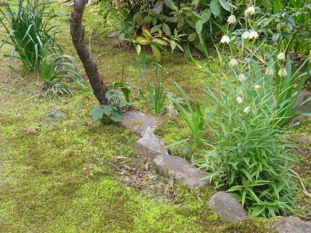 04-1)  17.03.30 鎌倉「安国論寺」 細身ながらも高木の古い桜が咲き揃った頃