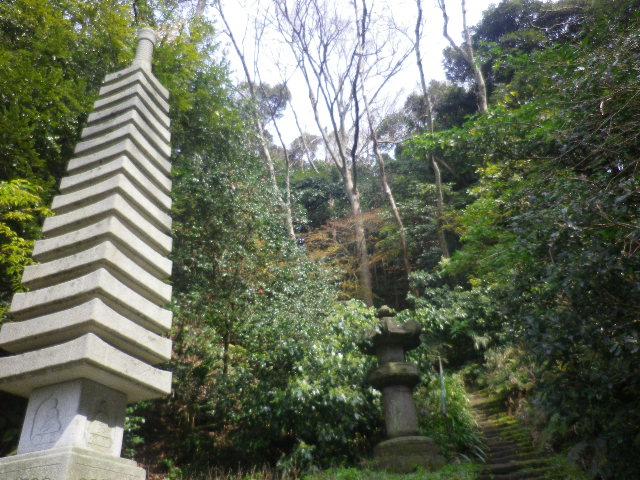 14)  17.03.30 鎌倉「安国論寺」 細身ながらも高木の古い桜が咲き揃った頃