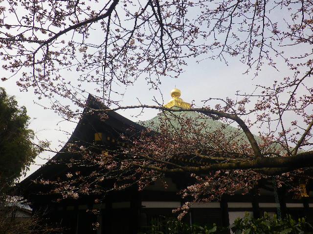 02-2)   17.03.30 鎌倉「長勝寺」 桜が開花し始めた頃