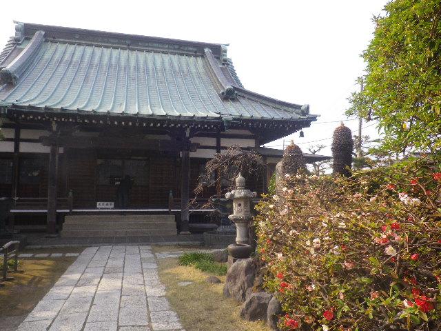 01-1)    17.03.30 鎌倉「九品寺」 未だかナ?まだかな?っと思っていたら、奥で咲き揃っていた木瓜。