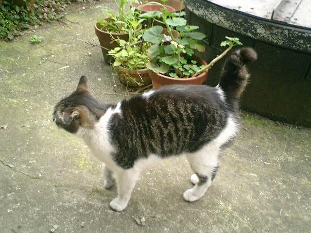 01)実家周辺のノラネコ。何度も書いたが、私は愛猫家ではありませんし写真が趣味でもありません。。