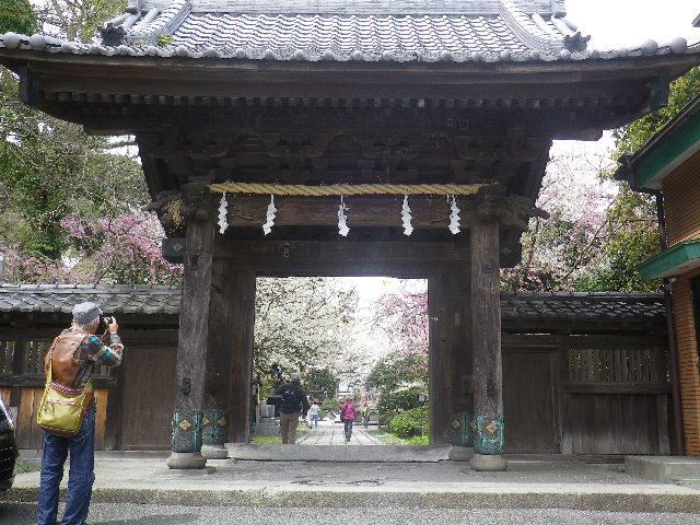 03-1) 山門 _ 17.04.10 鎌倉「長勝寺」 の桜