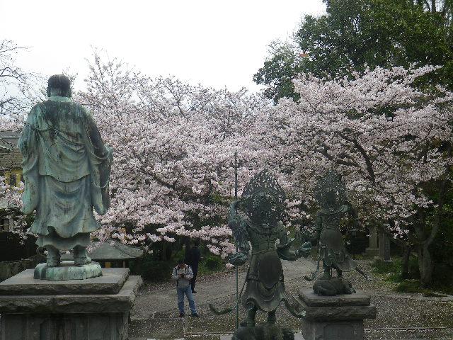 07) 本堂の階段を登って振り返る  _ 17.04.10 鎌倉「長勝寺」 の桜