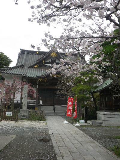 04-1)    17.04.10 鎌倉「妙隆寺」の桜