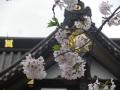 04-2)   17.04.10 鎌倉「妙隆寺」の桜