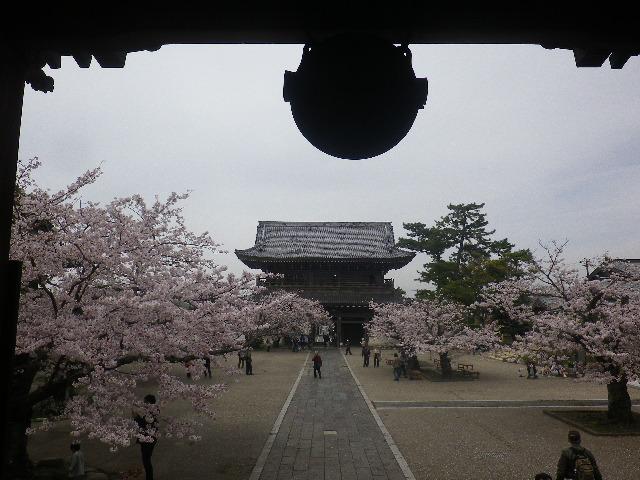 08)    17.04.10 鎌倉「光明寺」の桜