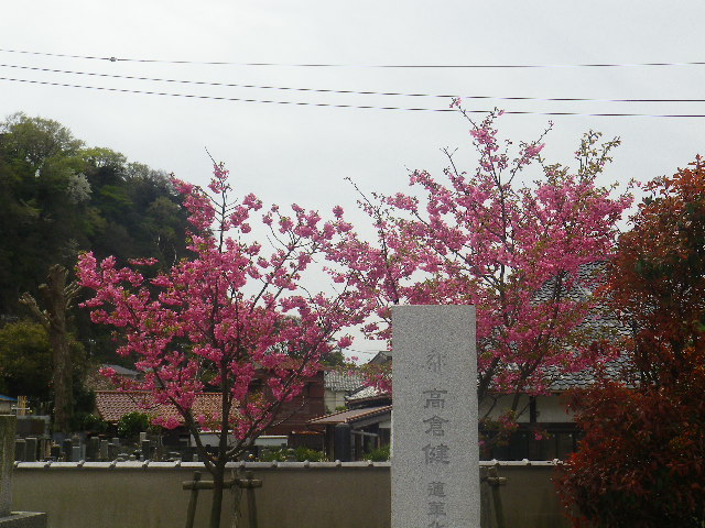 18-1)    17.04.10 鎌倉「光明寺」の桜