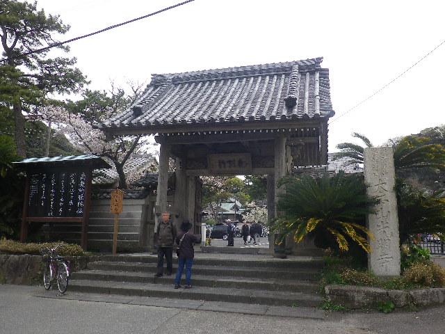 00)    17.04.10 鎌倉「光明寺」例年よりも開花が遅かった桜