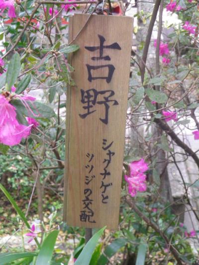 06-1)    17.04.10 鎌倉「荏柄天神社」の桜