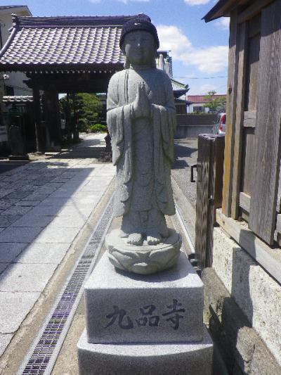01)    17.04.23 鎌倉「九品寺」のナニワイバラ(難波茨)