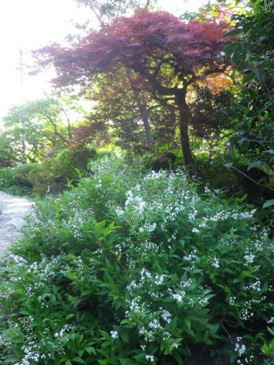 06-2) ひめうつぎ  _ 17.04.23 鎌倉「大巧寺」 晩春の庭