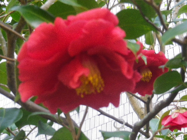 12-2) グランドスラム  _ 17.04.23 鎌倉「大巧寺」 晩春の庭