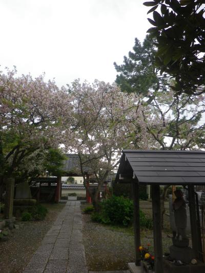 04)    17.04.22 鎌倉「千手院」の桜