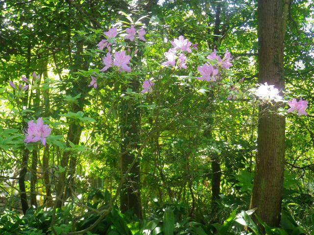 03)    17.05.05端午  鎌倉「寿福寺」立夏。 中門を潜ることができる期間の日。