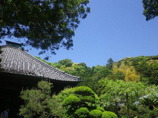 09)    17.05.05端午  鎌倉「寿福寺」立夏。 中門を潜ることができる期間の日。