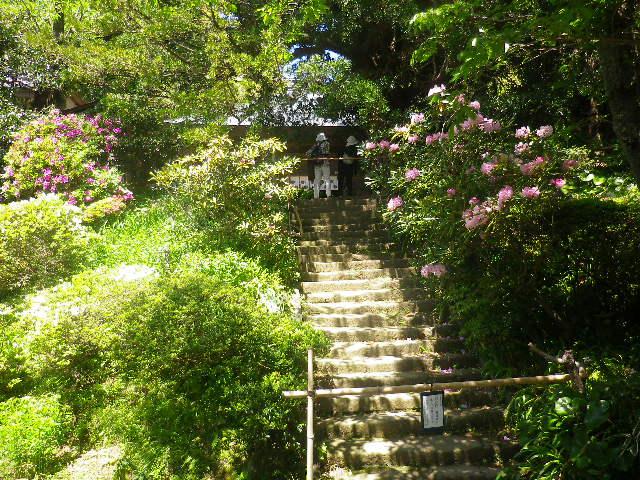 10)   17.05.05端午  鎌倉「浄光明寺」立夏