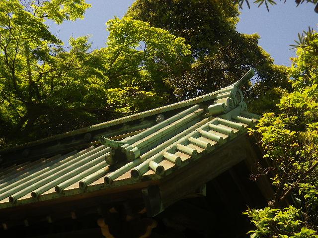 02-4)   惣門の屋根。調べもせずに推測だが、格式高い尼寺として大伽藍を構えていた時代は仏殿~山門に対して現在とは異なる配置だったの ' かもしれない '。 17.05.05端午  鎌倉「英勝寺