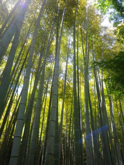 15)   竹林 17.05.05端午  鎌倉「英勝寺」立夏。