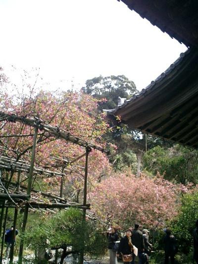 09) 鎌倉長谷「光則寺」。 本堂と海棠