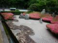 08)  17.05.25 鎌倉「光明寺」 ' 三尊五祖の石庭 ' のサツキが咲いた