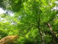 06)   17.06.09 鎌倉「覚園寺」参拝