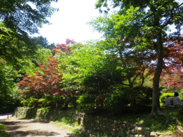 b01-1) 写真a01) を上りきって直ぐの、通称 ' 葛原岡(くずはらガおか/くずはらおか)' 地域。 「源氏山公園 _ 北西地域」