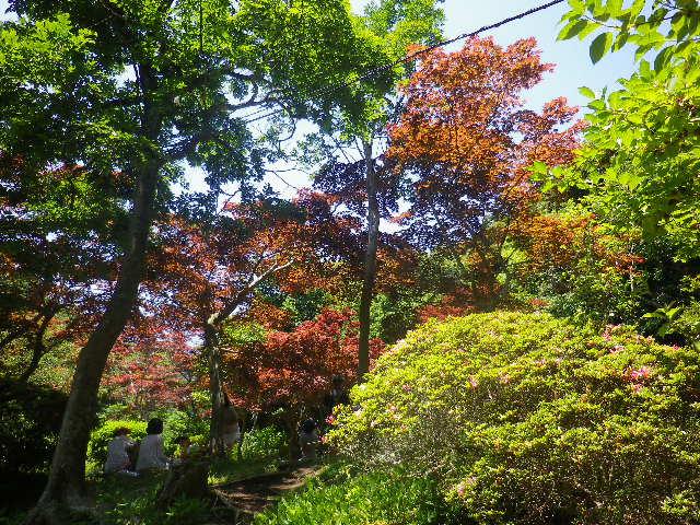 b01-2)  「源氏山公園 _ 北西地域」