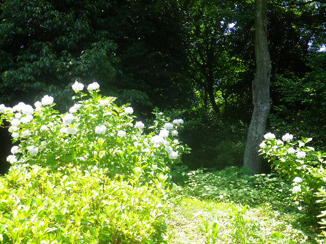 B03)  「源氏山公園 _ 北西地域」