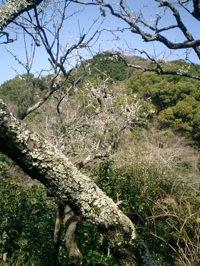 E06    07.02.21 鎌倉「瑞泉寺」梅の季節