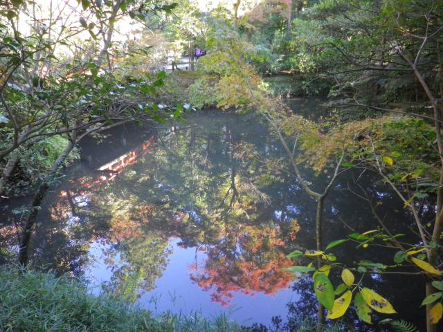 E05)  柳原神池 17.11.24 初冬の 鎌倉「鶴岡八幡宮」